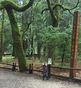 we braved the rain, walking in yhe enchanted redwoods above Santa Cruz