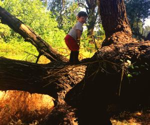 Climbing Oak tree at age three
