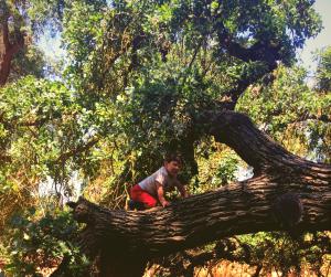 First tree climbing experience age three