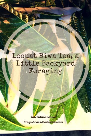 Loquat Biwa Tea Backyard Foraging