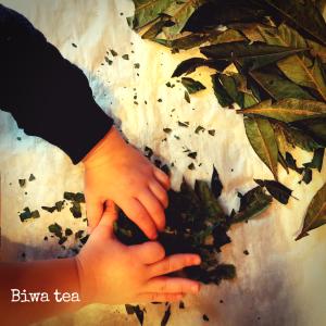 Drying Biwa Tea