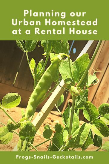 Planning Urban Homestead Rental House